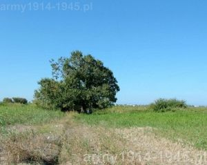 Miejsce dookoła którego odkryto jamy grobowe. (Isola Coo)