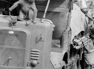Ta sama małpka na solidnym łańcuchu (Luce)